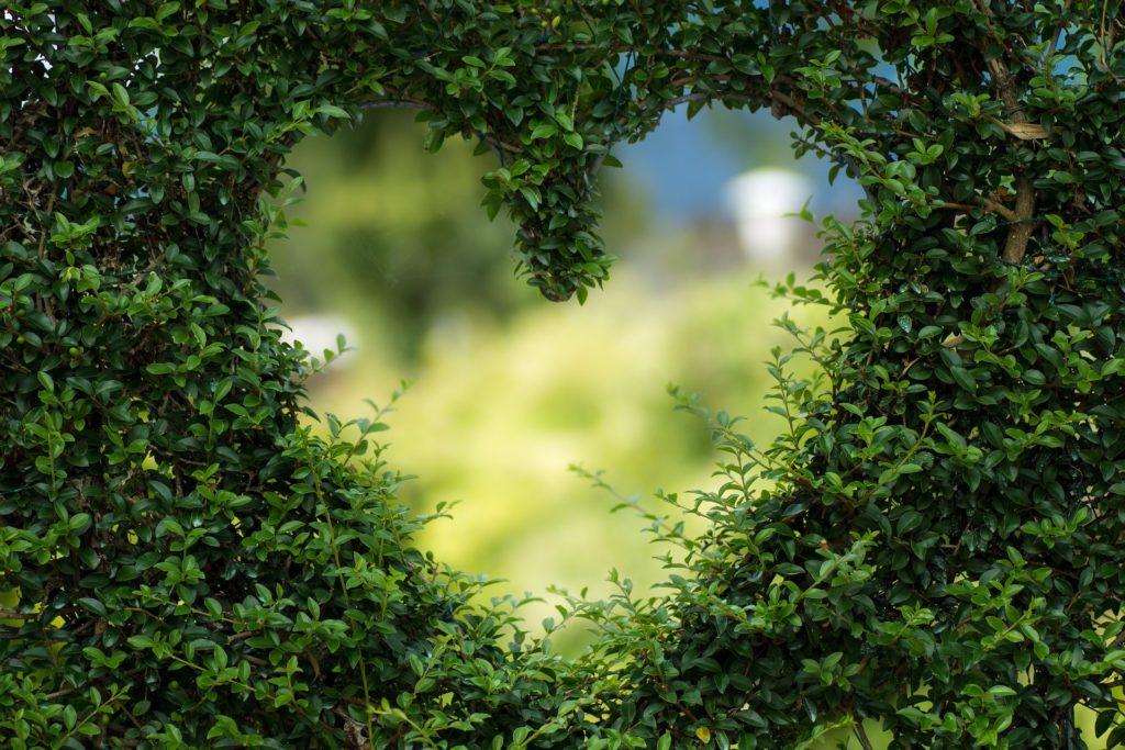 Groen in de wijk – Sponsor tuinmateriaal